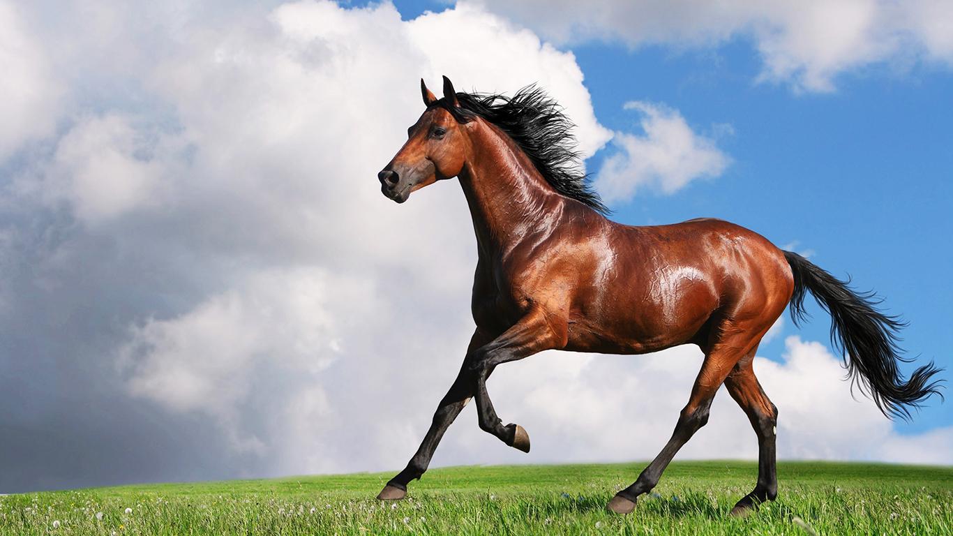 Sorensen Equestrian Park